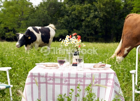 Cow in field with table