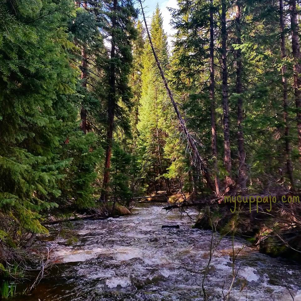 Hiking along the Fraser River - saying yes to movement and no limitations